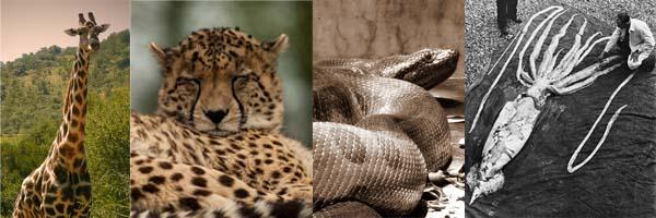 حیوانات رکورد دار